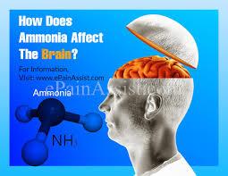 ammonia brain